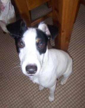 Lewis - Dog Rescue Newcastle