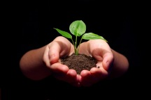 Hands soil